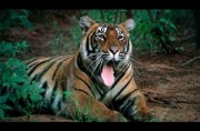 Nature and Animals Inspirational Video Clips