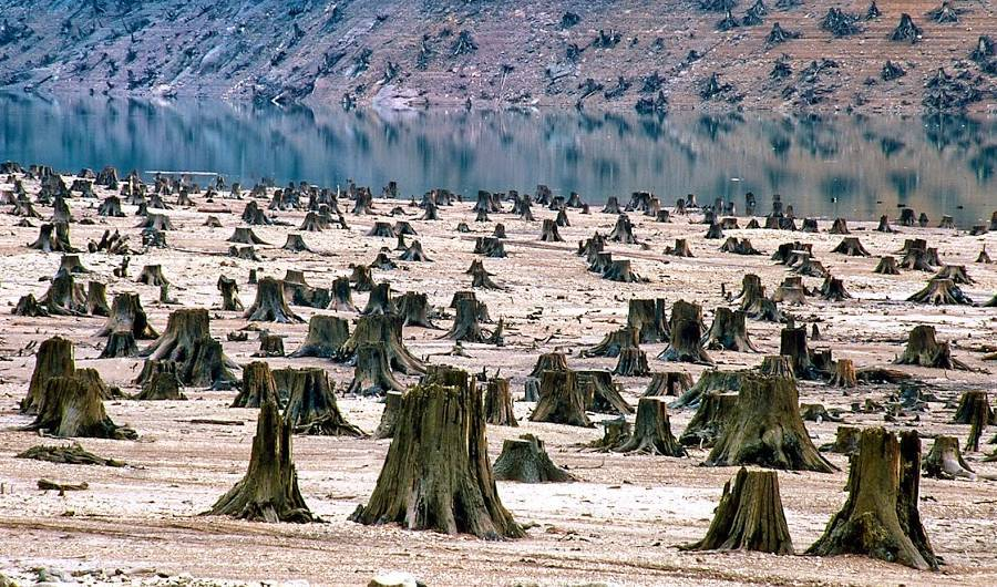 deforestation leading to global warming