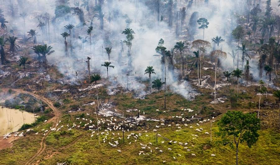 deforestation leading to global warming, a global issue